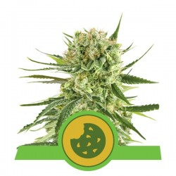 ROYAL COOKIES AUTOMATIC -...